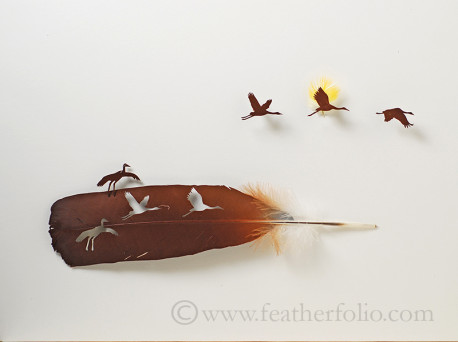 Cut Feather-1