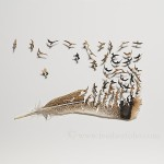 Cut Feather-4