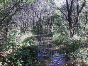 自然道の様子