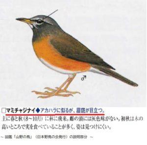 図鑑 「山野の鳥」(日本野鳥の会)からのイラスト