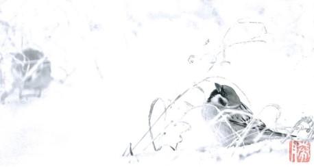 スズメの写真