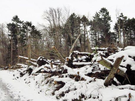 台風被害の倒木跡地