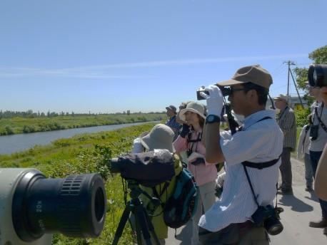 探鳥会の一コマ(新川下流域を歩く)