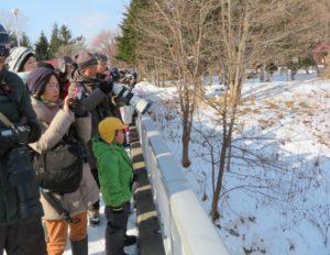 探鳥会の様子 橋上からヤマセミを観察中