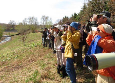 探鳥会風景ホオジロを観察
