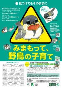 野鳥の子育て応援ポスター